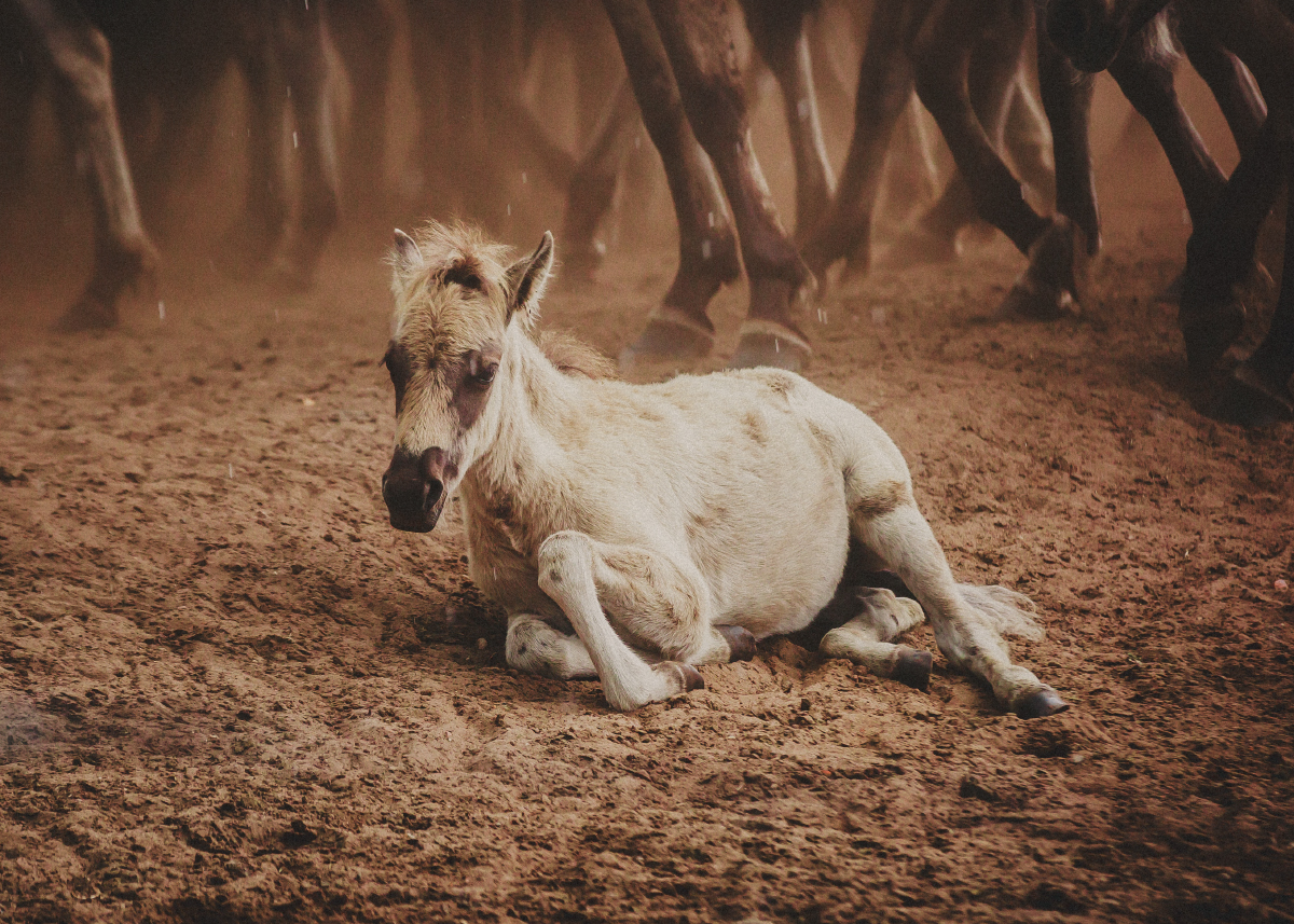 pferde fotograf